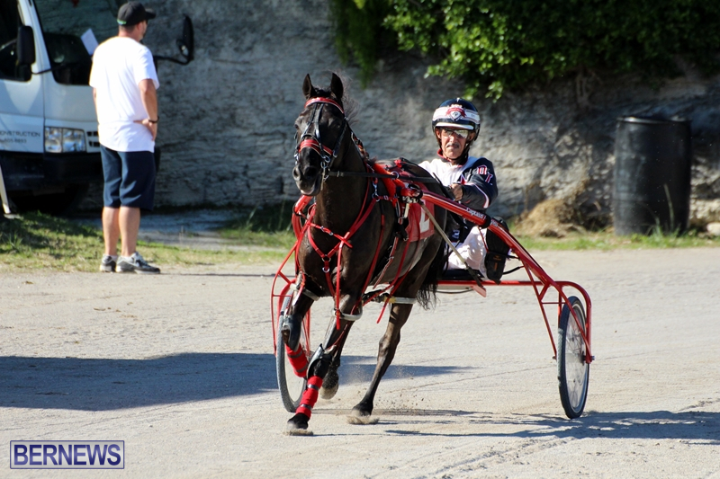 Bermuda-Harness-Pony-Racing-Dec-2015-14