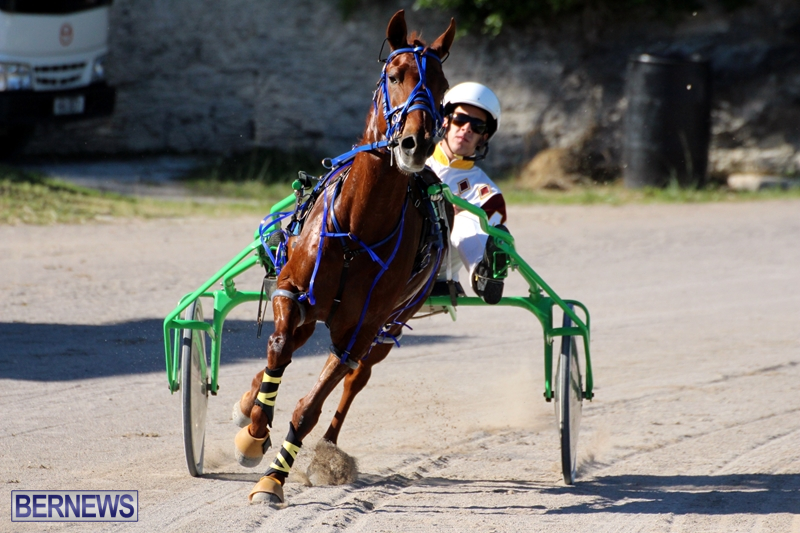 Bermuda-Harness-Pony-Racing-Dec-2015-17