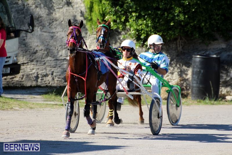 Bermuda-Harness-Pony-Racing-Dec-2015-4