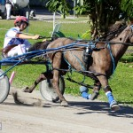 Bermuda Harness Pony Racing Dec 2015 (6)