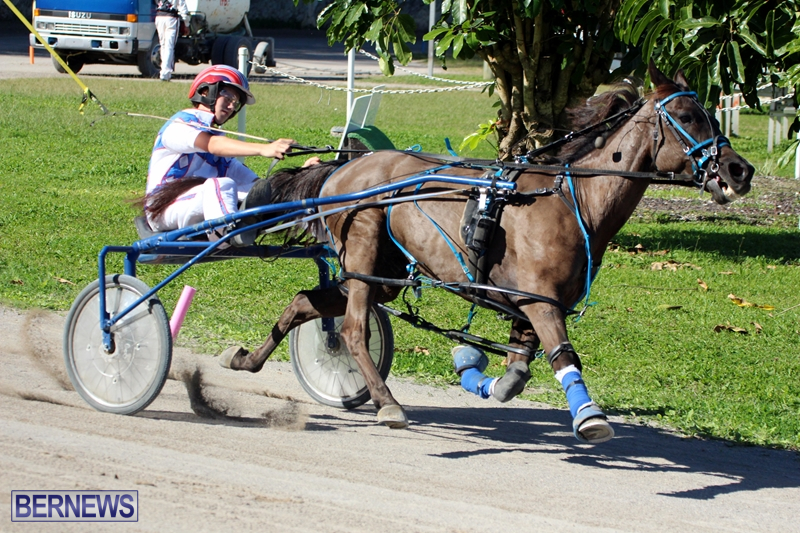 Bermuda-Harness-Pony-Racing-Dec-2015-6