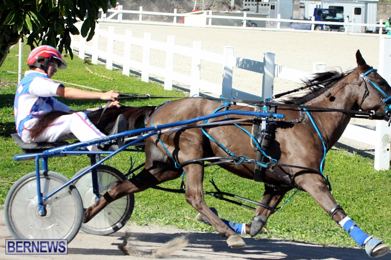 Bermuda-Harness-Pony-Racing-Dec-2015-7