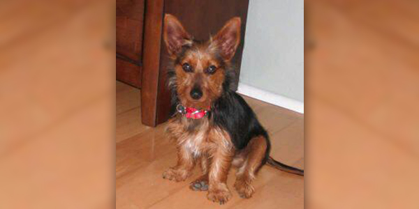 Dog Named Jazz Missing Bermuda Jan 9 2016