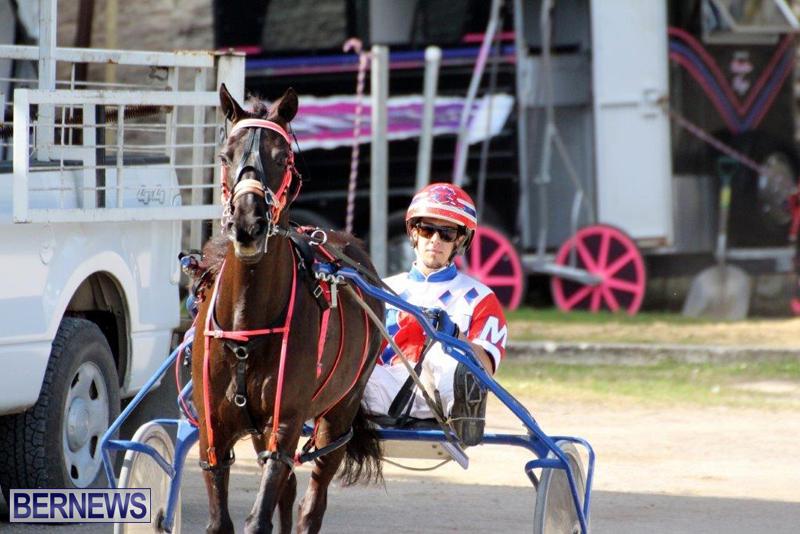 Harness-Pony-Racing-Bermuda-Jan-13-2016-1