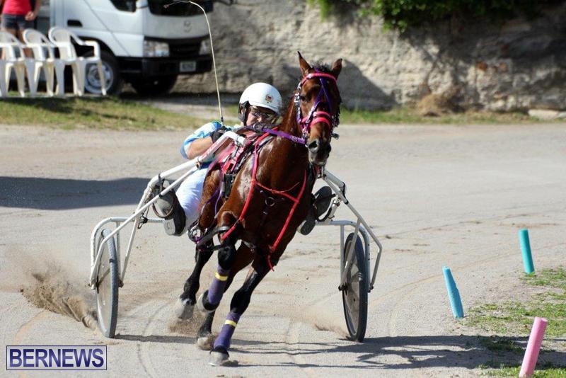 Harness-Pony-Racing-Bermuda-Jan-13-2016-10