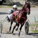 Harness Pony Racing Bermuda Jan 13 2016 (11)