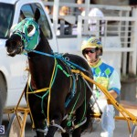 Harness Pony Racing Bermuda Jan 13 2016 (12)