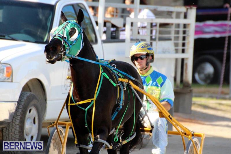 Harness-Pony-Racing-Bermuda-Jan-13-2016-12