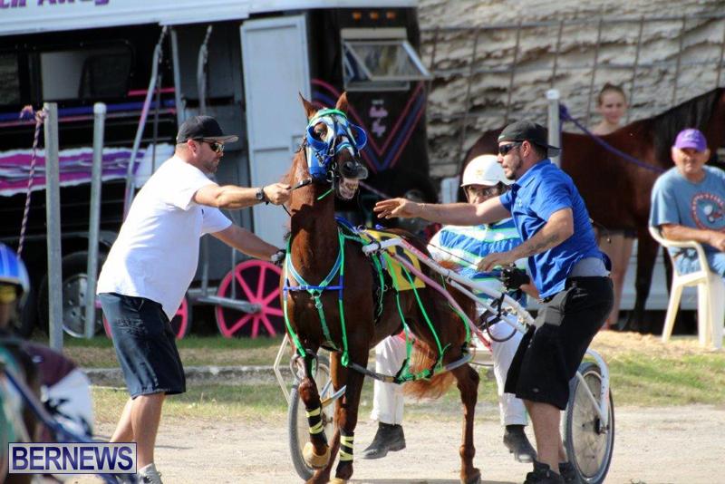 Harness-Pony-Racing-Bermuda-Jan-13-2016-14