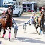 Harness Pony Racing Bermuda Jan 13 2016 (2)