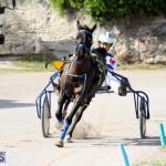 Harness Pony Racing Bermuda Jan 13 2016 (5)
