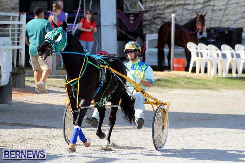 Harness-Pony-Racing-Bermuda-Jan-13-2016-7