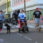 Argus Walks The Walk Bermuda, February 28 2016-83