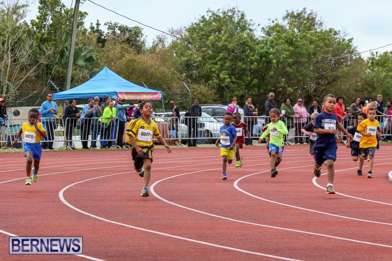 Telford-Electric-Magic-Mile-Bermuda-February-27-2016-176