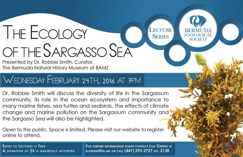 The Ecology of the Sargasso Sea Ad