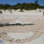 Beach Art Bermuda, March 19 2016-14