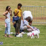 Gilbert Lamb Fun Day St. David's Cricket Club Good Friday Bermuda, March 25 2016-63
