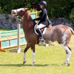 Equestrian Bermuda May 03 2016 (17)