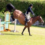 Equestrian Bermuda May 03 2016 (4)