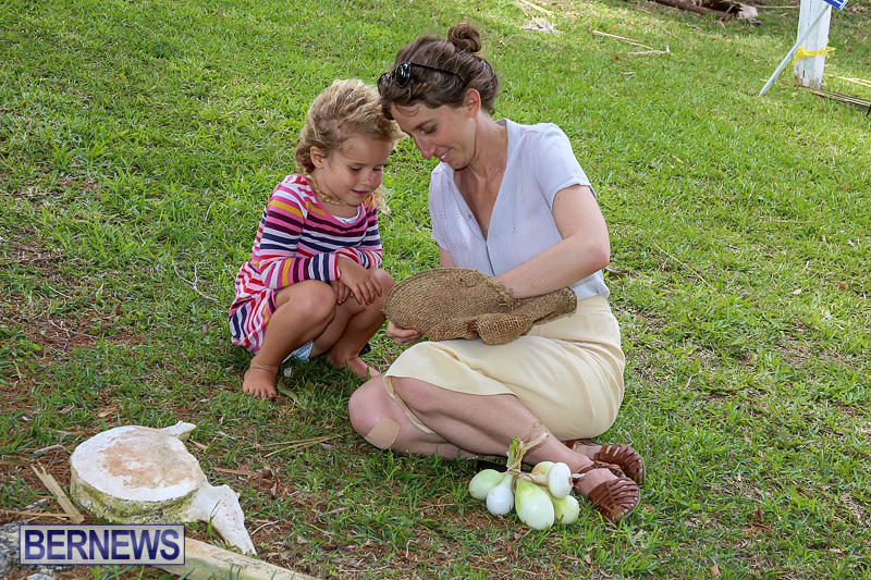 Onion-Day-at-Carter-House-Bermuda-May-14-2016-1