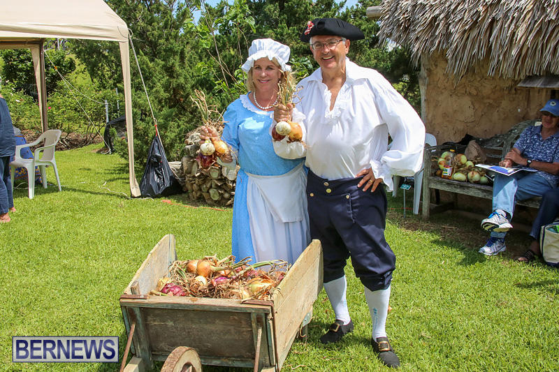 Onion-Day-at-Carter-House-Bermuda-May-14-2016-14