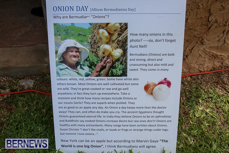 Onion-Day-at-Carter-House-Bermuda-May-14-2016-23