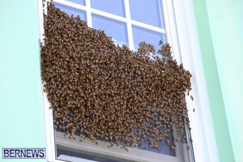 bees bermuda generic 32414 (1)
