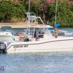 Around The Island Seagull Race Bermuda, June 25 2016-38