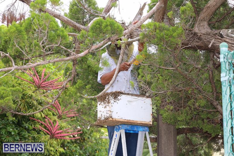 Bermuda-bee-swarm-june-23-2016-13