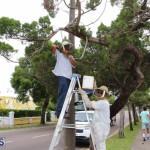 Bermuda bee swarm june 23 2016  (18)