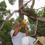 Bermuda bee swarm june 23 2016  (2)