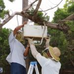 Bermuda bee swarm june 23 2016  (20)