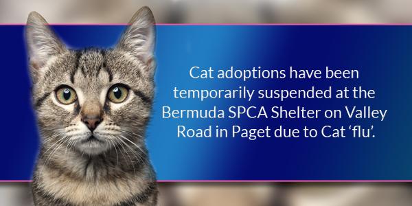 Cat TC Bermuda June 16 2016