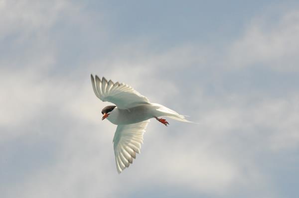 bird bermuda june 2016 (6)