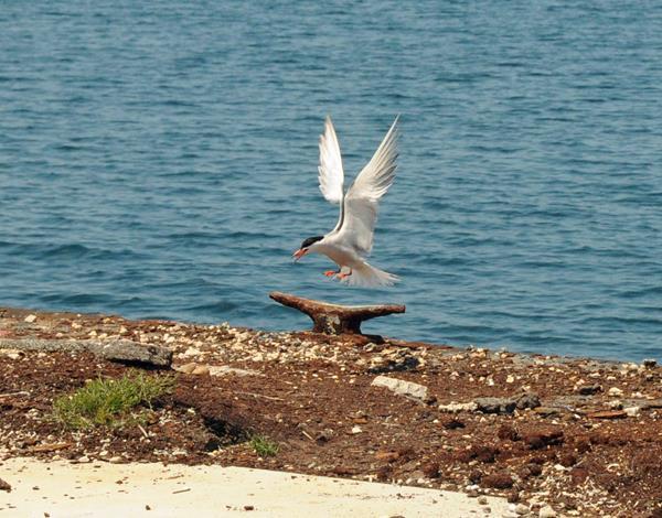 bird bermuda june 2016 (7)