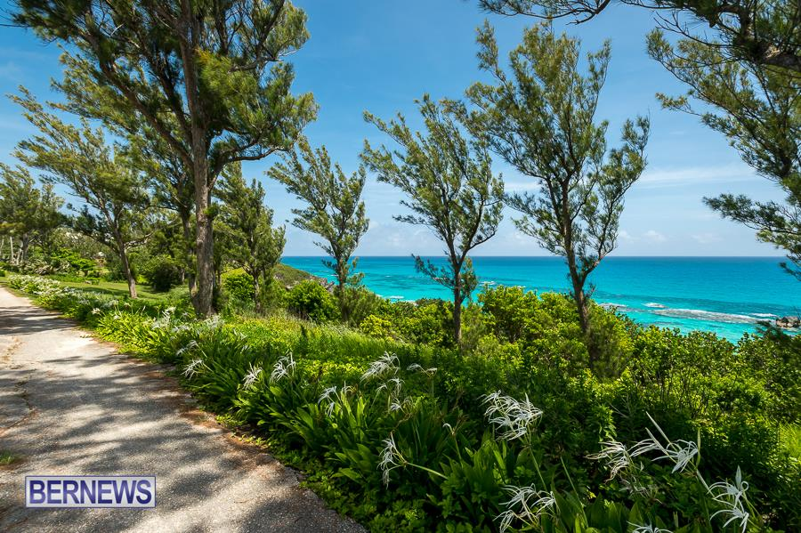 445 - South Shore Bermuda Generic July 2016