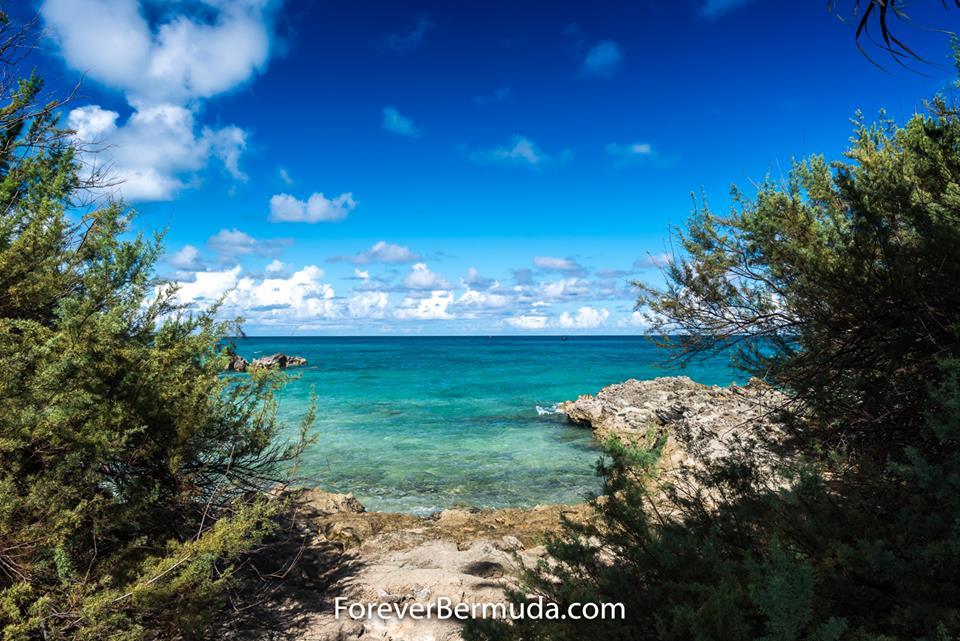 202 Nature ForB Bermuda Generic September 2016