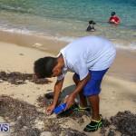 EY Coastal Clean-Up Bermuda, September 17 2016-12