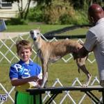 Bermuda Kennel Club Dog Show, October 23 2016-1