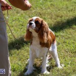 Bermuda Kennel Club Dog Show, October 23 2016-10