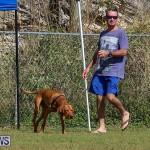 Bermuda Kennel Club Dog Show, October 23 2016-101