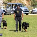 Bermuda Kennel Club Dog Show, October 23 2016-102