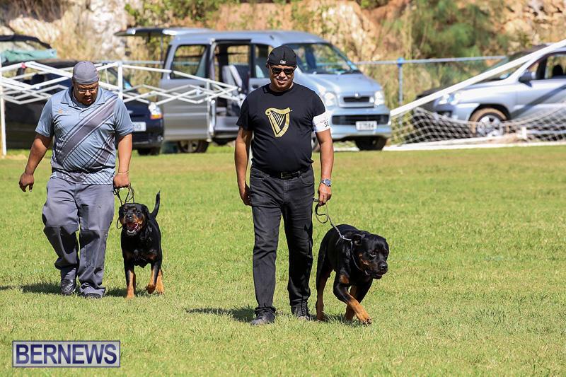 Bermuda-Kennel-Club-Dog-Show-October-23-2016-102