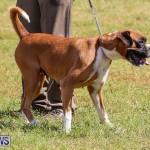 Bermuda Kennel Club Dog Show, October 23 2016-105