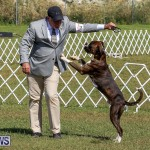 Bermuda Kennel Club Dog Show, October 23 2016-107