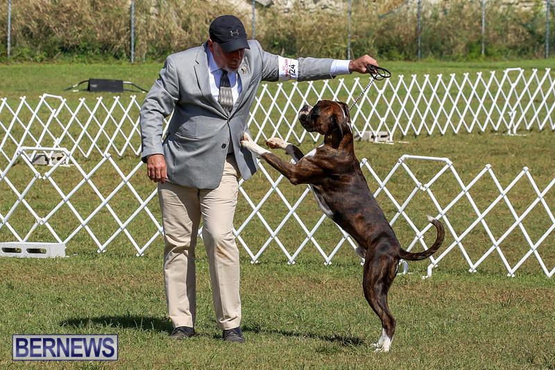 Bermuda-Kennel-Club-Dog-Show-October-23-2016-107