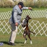 Bermuda Kennel Club Dog Show, October 23 2016-108