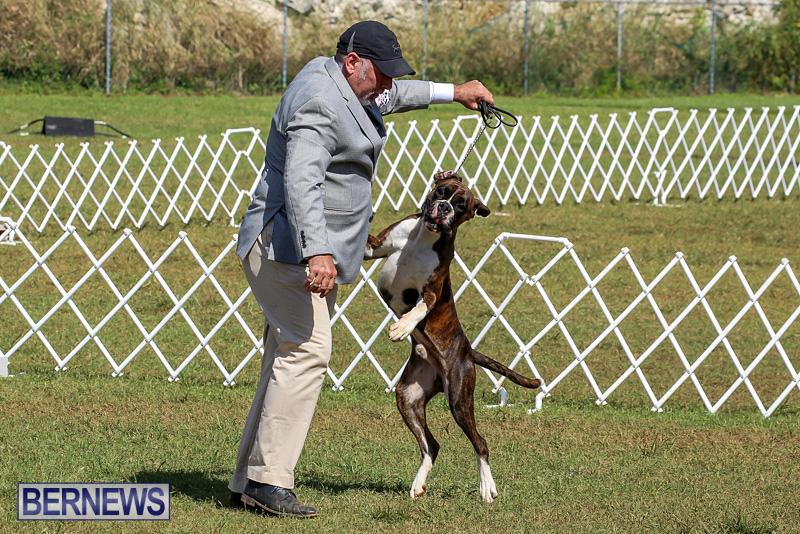 Bermuda-Kennel-Club-Dog-Show-October-23-2016-108