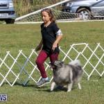 Bermuda Kennel Club Dog Show, October 23 2016-11