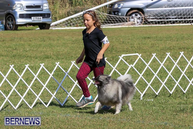 Bermuda-Kennel-Club-Dog-Show-October-23-2016-11